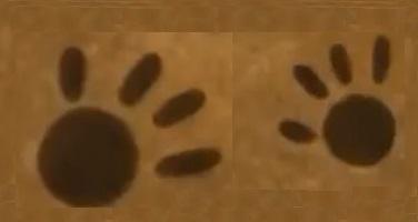 Le impronte del cuore